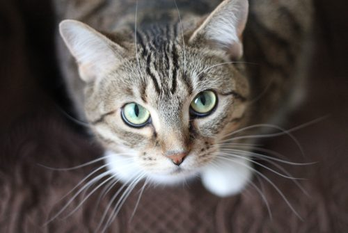 Het in huis halen van een kat